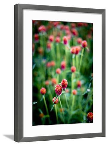 Red Flowers-Beth Wold-Framed Art Print