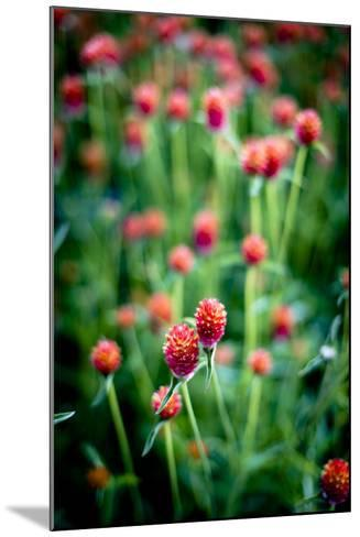 Red Flowers-Beth Wold-Mounted Photographic Print