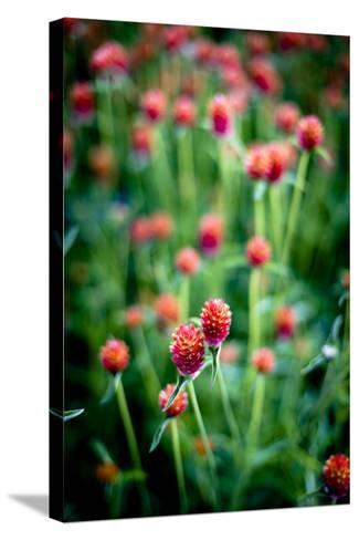 Red Flowers-Beth Wold-Stretched Canvas Print
