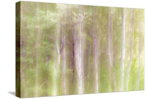 Aspen Blur III-Kathy Mahan-Stretched Canvas Print
