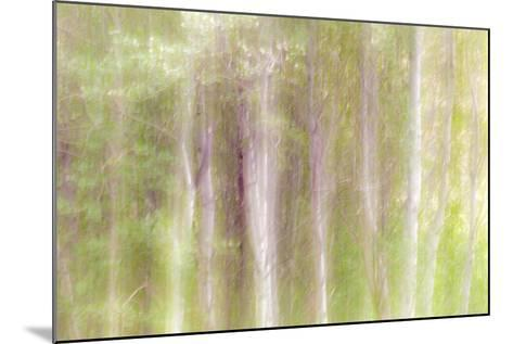 Aspen Blur III-Kathy Mahan-Mounted Photographic Print
