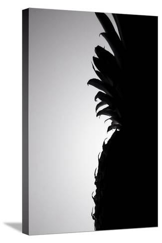 Pineapple Silhouette-Monika Burkhart-Stretched Canvas Print