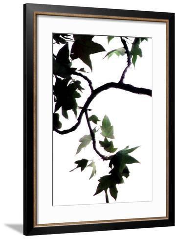 Maple Branch VI-Monika Burkhart-Framed Art Print