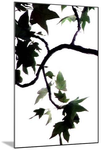 Maple Branch VI-Monika Burkhart-Mounted Photographic Print