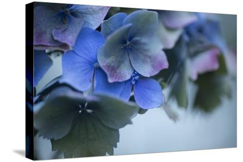 Autumn Hydrangea I-Rita Crane-Stretched Canvas Print
