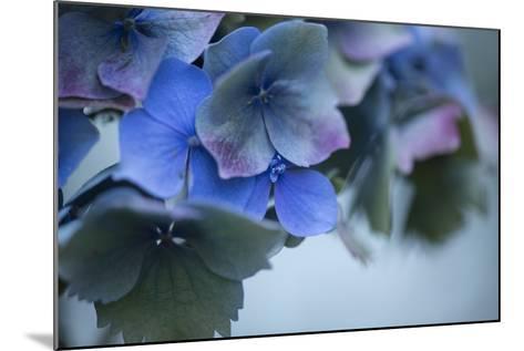 Autumn Hydrangea I-Rita Crane-Mounted Photographic Print