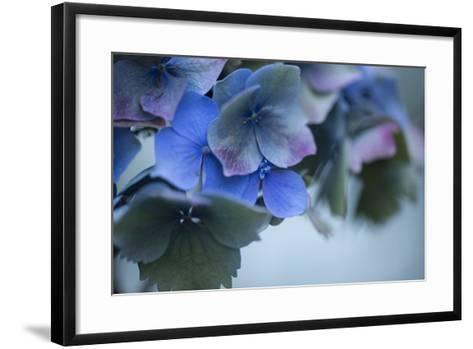 Autumn Hydrangea I-Rita Crane-Framed Art Print
