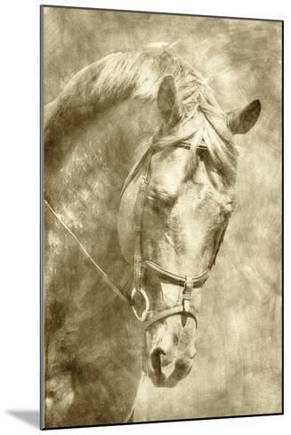 Diego I-Alan Hausenflock-Mounted Art Print