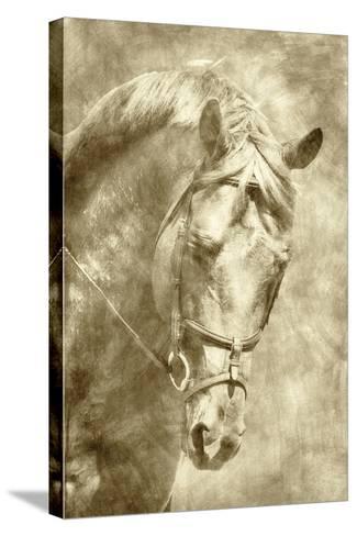 Diego I-Alan Hausenflock-Stretched Canvas Print