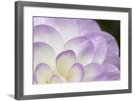 Lavender Dahlia I-Rita Crane-Framed Art Print