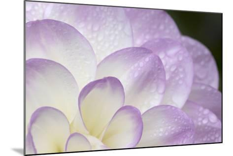Lavender Dahlia I-Rita Crane-Mounted Photographic Print