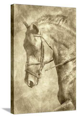 Diego II-Alan Hausenflock-Stretched Canvas Print
