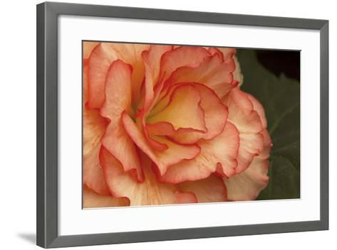 Festive Begonia I-Rita Crane-Framed Art Print