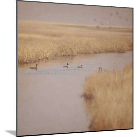 Canal Ducks-Roberta Murray-Mounted Photographic Print