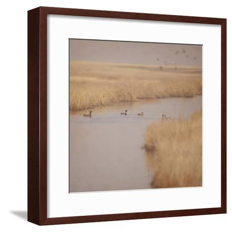 Canal Ducks-Roberta Murray-Framed Art Print