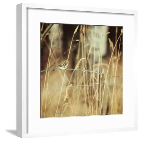 Autumn Redpoll-Roberta Murray-Framed Art Print