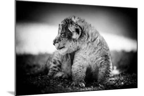 Lion Cub-Beth Wold-Mounted Photographic Print