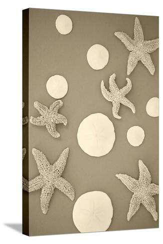 Starfish and Sand Dollars II-Karyn Millet-Stretched Canvas Print