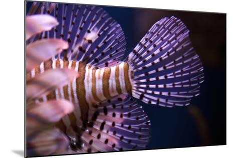 Tropical Fish-Karyn Millet-Mounted Photographic Print