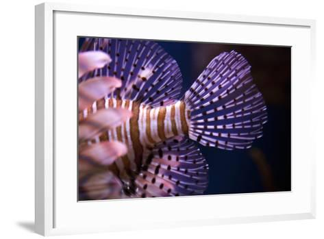 Tropical Fish-Karyn Millet-Framed Art Print