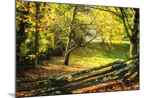 Backyard Color II-Alan Hausenflock-Mounted Photographic Print