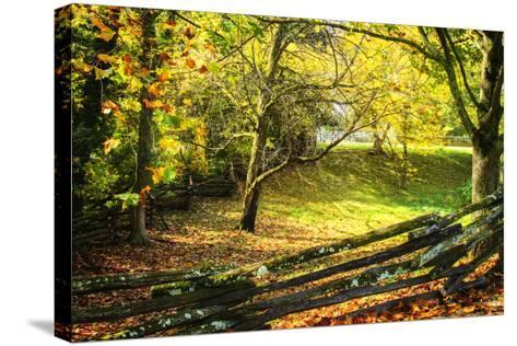 Backyard Color II-Alan Hausenflock-Stretched Canvas Print