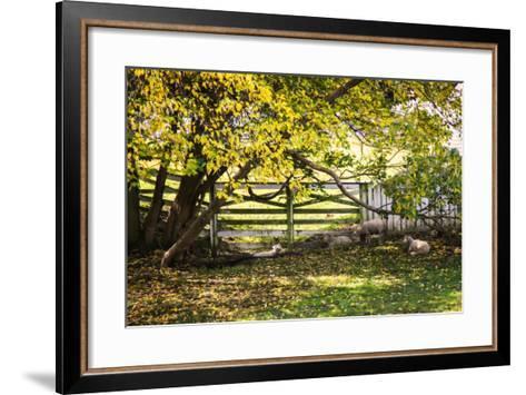 Lambs II-Alan Hausenflock-Framed Art Print
