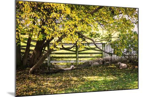 Lambs II-Alan Hausenflock-Mounted Photographic Print