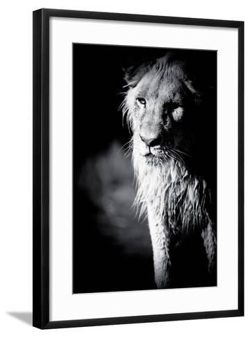 Lioness in Water II-Beth Wold-Framed Art Print