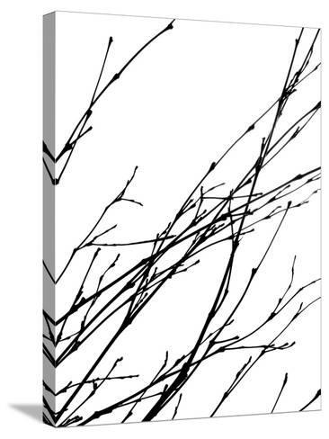 Dancing Branches IV-Monika Burkhart-Stretched Canvas Print