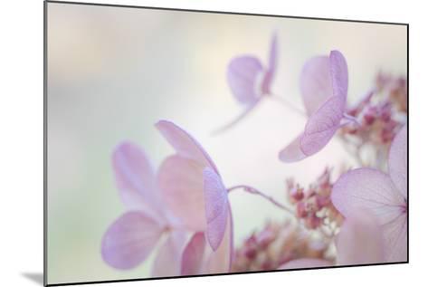 Pink Diamond II-Kathy Mahan-Mounted Photographic Print