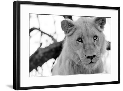 Male Lion-Beth Wold-Framed Art Print