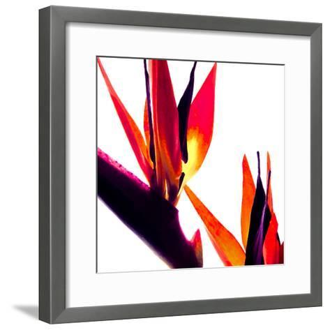 Bird of Paradise VI-Monika Burkhart-Framed Art Print