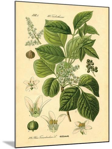Botanical II-N^ Harbick-Mounted Art Print