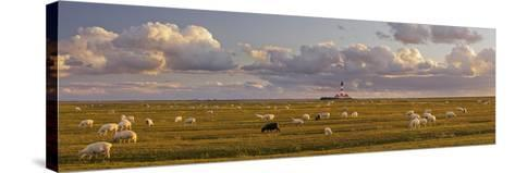 Sheep, Lighthouse of Westerhever (Municipality), Schleswig-Holstein, Germany-Rainer Mirau-Stretched Canvas Print