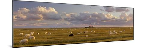 Sheep, Lighthouse of Westerhever (Municipality), Schleswig-Holstein, Germany-Rainer Mirau-Mounted Photographic Print