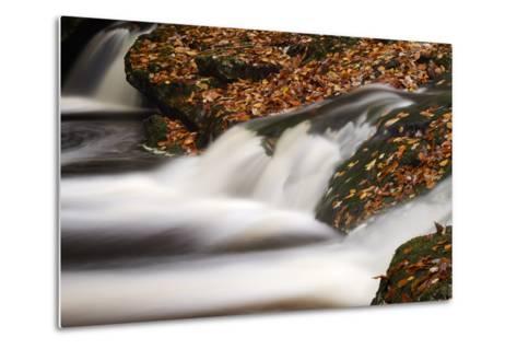 Belgium, High Fens, Nature Reserve High Fens-Eifel-Andreas Keil-Metal Print