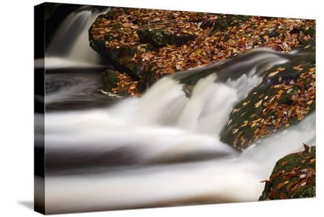 Belgium, High Fens, Nature Reserve High Fens-Eifel-Andreas Keil-Stretched Canvas Print