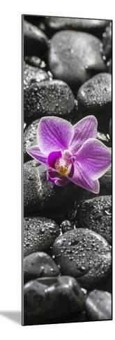 Orchid Blossom on Black Stones-Uwe Merkel-Mounted Photographic Print