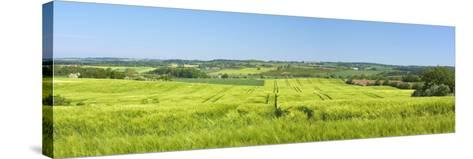 Denmark, Funen, Wheat Fields, Near Horne-Chris Seba-Stretched Canvas Print