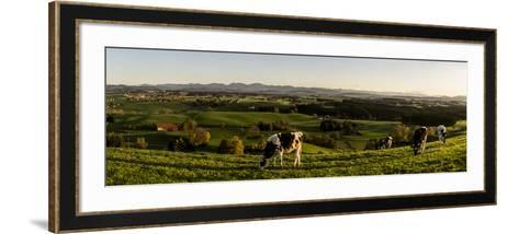 Cows in Front of the Alpine Upland Near ArgenbŸhl, Baden-WŸrttemberg-Markus Leser-Framed Art Print