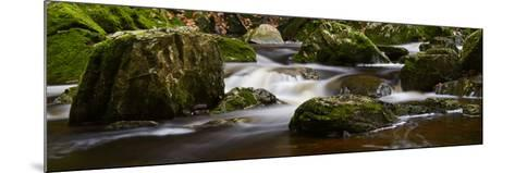 Belgium, High Fens, Hautes Fagnes, Nature Reserve High Fens-Eifel, Tros Marets Brook-Andreas Keil-Mounted Photographic Print