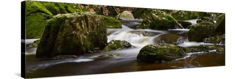 Belgium, High Fens, Hautes Fagnes, Nature Reserve High Fens-Eifel, Tros Marets Brook-Andreas Keil-Stretched Canvas Print
