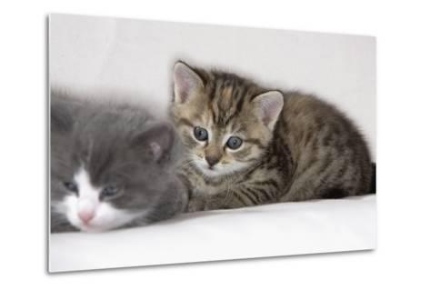 Couch, Cats, Young, Lying, Snuggles Up, Sleepily, Dozes, Together, Animals, Mammals-Nikky-Metal Print
