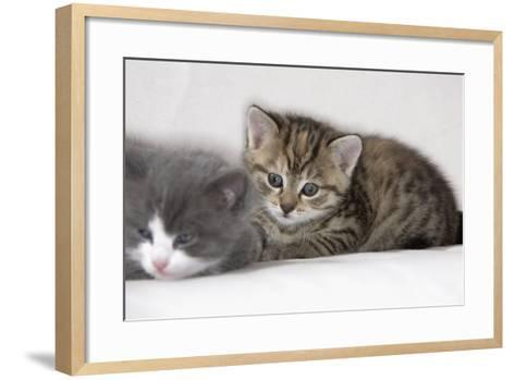 Couch, Cats, Young, Lying, Snuggles Up, Sleepily, Dozes, Together, Animals, Mammals-Nikky-Framed Art Print