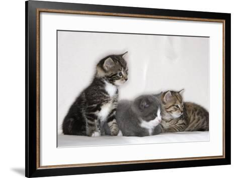 Couch, Cats, Young, Sitting, Lying, Side by Side, Observes, Curiously, Sidelong Glance, Animals-Nikky-Framed Art Print