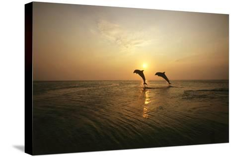 Sea, Silhouette, Ordinary Dolphins, Delphinus Delphis, Jump-Frank Lukasseck-Stretched Canvas Print
