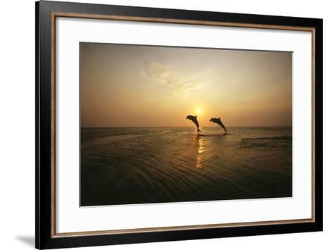 Sea, Silhouette, Ordinary Dolphins, Delphinus Delphis, Jump-Frank Lukasseck-Framed Art Print