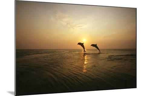 Sea, Silhouette, Ordinary Dolphins, Delphinus Delphis, Jump-Frank Lukasseck-Mounted Photographic Print