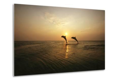 Sea, Silhouette, Ordinary Dolphins, Delphinus Delphis, Jump-Frank Lukasseck-Metal Print